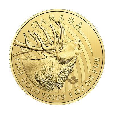 1 oz Gold 99999 Canada Rothirsch / Bulking Elk in Blister / inkl. Sicherheitsmerkmal