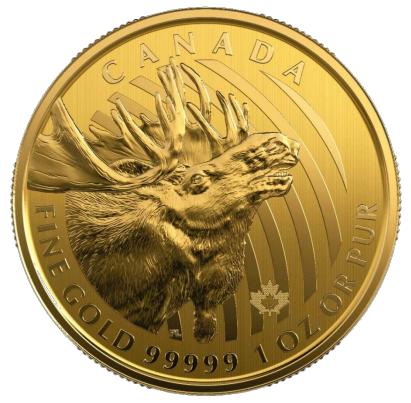 1 oz Gold 99999 Canada 2019 Elch / Moose in Blister / inkl. Sicherheitsmerkmal